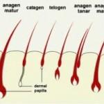 Ciclul de crestere a parului uman